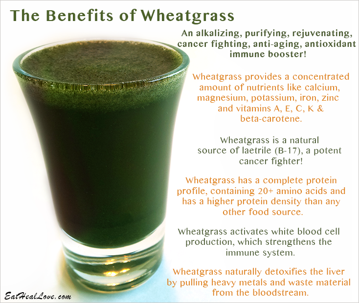 The Benefits of Wheatgrass