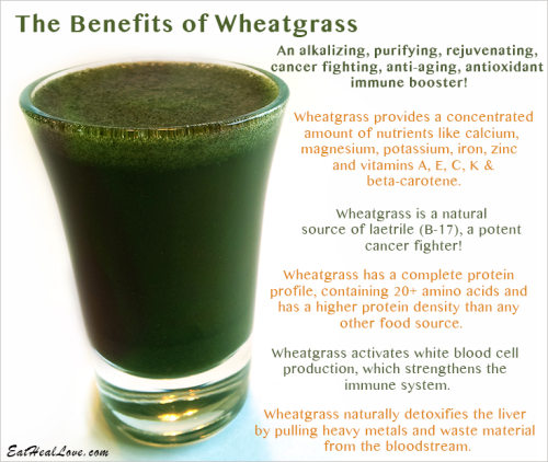 Happy St Patrick S Day Yes It S Wheatgrass Wait Don T